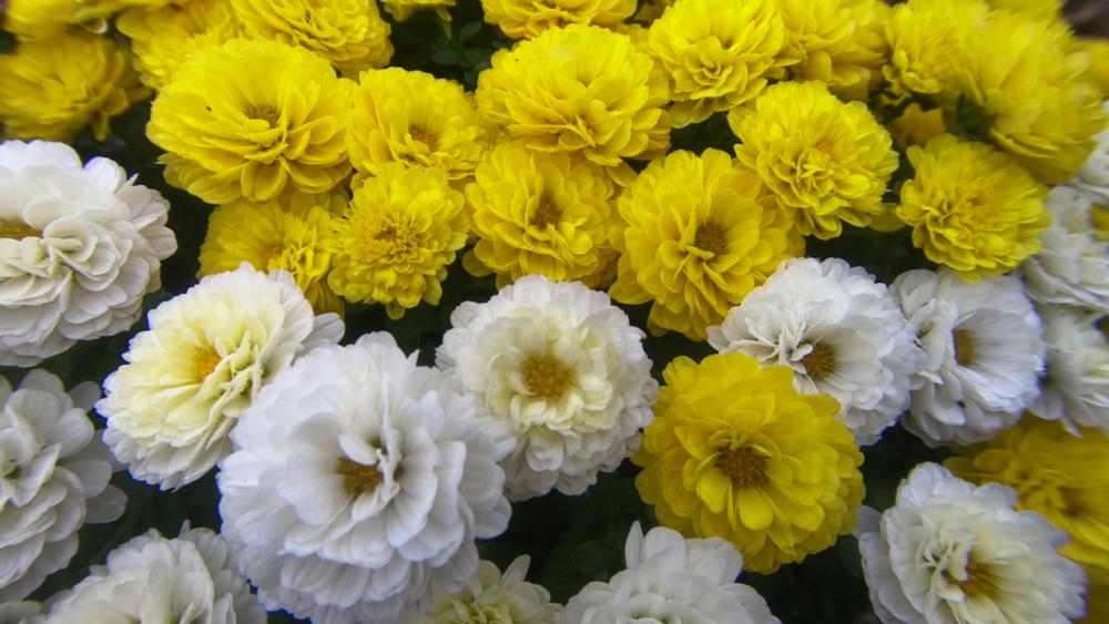 花のマクロ撮影