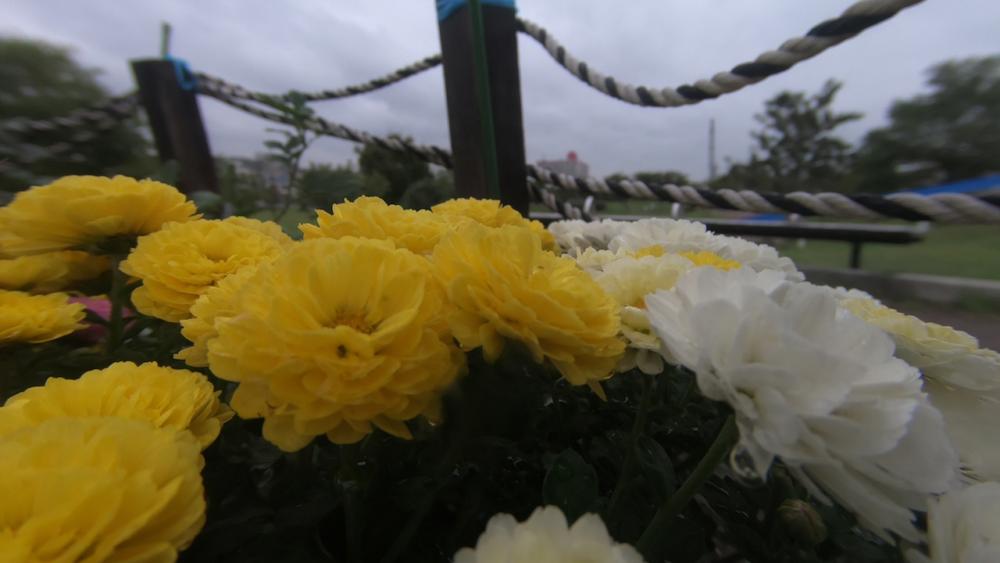 花と背景2